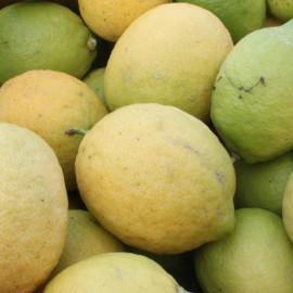 LENOSTREARANCE_limoni